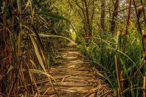 swamp-1706114_640